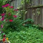 Spring garden clean